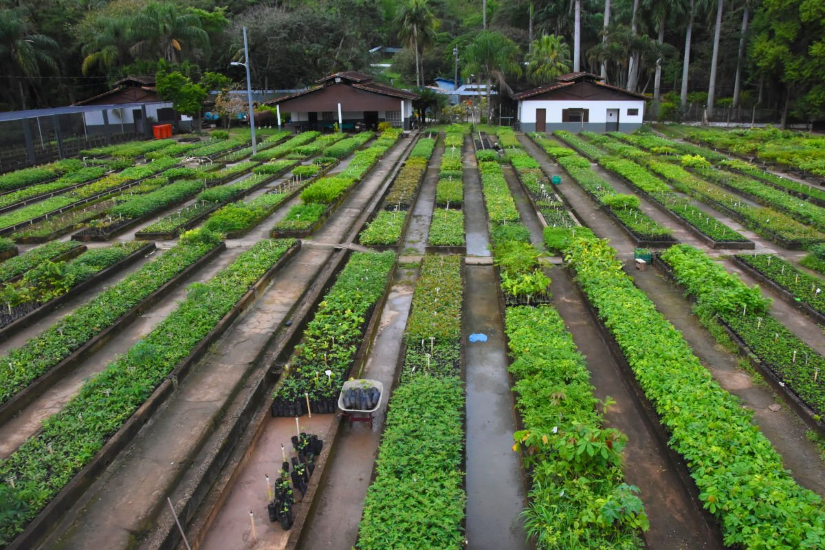 Mutirão Reflorestamento, programa de recuperação do meio ambiente
